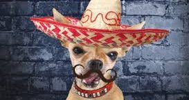 cropped-Cinco-De-Mayo-Dog.jpg